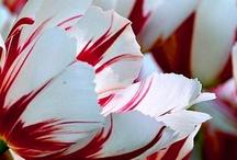 Flower Power / by Callyan Y