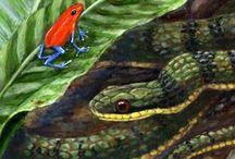 Rainforest food chain