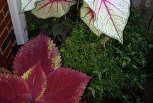 My Plants 2013 / by Richard Carter