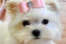 Cute Dogs / Cute dogs, puppies, cats and kittens to get your cuteness overload fix