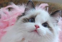 Cat Corner / Recipes for cats, information and resources for cat lovers and cute cat photos