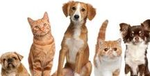Pets / Here you will find everything you need to know about pets from dog treats to cat toys.