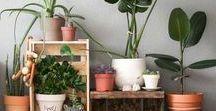 Ikea - rostliny