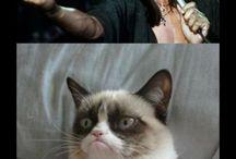 Grumpy Cat / by Tammy Gibson