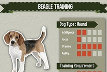Beagle Training / All the best compilation of Beagle picture, art, and infographic of training tips #beagle