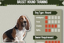 Basset Hound Training / All the best compilation of Basset Hound picture, art, and infographic of training tips #bassethound