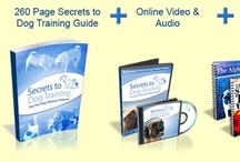 Best Dog Training Guide
