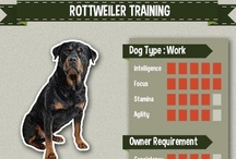 Rottweiler Training / All the best compilation of Rottweiler picture, art, and infographic of training tips #rottweiler
