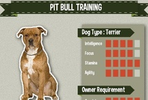 Pit Bull Training / All the best compilation of Pit Bull picture, art, and infographic of training tips #pitbull