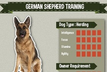 German Shepherd Training / All the best compilation of German Shepherd picture, art, and infographic of training tips #germanshepherd