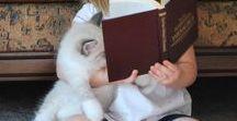 Katzen / Katzen begleiten den Menschen in vielen Situationen, sogar oft beim Lesen.