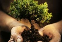 Save the Earth! / ~ Everything Green ~                                                   Conserve ~ Reuse ~ Recycle ~ Sustain  / by Tarryn Austin