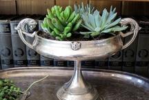 Succulents ~ Cactus ~ More / by Marie Morton