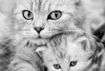 Precious Animals / by Suzan Hollis