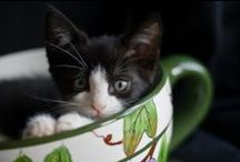 Kittens and Other Cute Animals for Chloe x / Kittens looking adorable in bone china teacups! Hedgehogs, puppies, horses and squirrels. Really :)