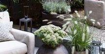 Balkone und Terrassen / Mit Pflanzen, wie Sommerfloor, Stauden und Gehölze mehr Gestaltung auf deinen Balkon oder deine Terrasse  bringen. Gestalten mit Pflanzen auch beim Urban Gardening. Mit Gartengestaltung zum schönen Balkon.