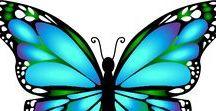 Motýlci / Motýlci