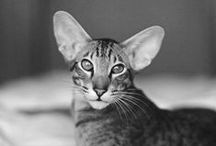Animal / A monochrome photograph with a forcible expression of animals
