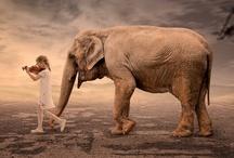 Beautiful Elephants / by Isabel Villalobos