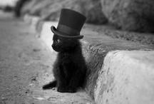 I Can Haz A Cute / by Jen Schwab