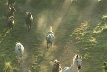 Run Wild Run Free...HORSES / by Delta...Charmers