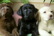 I <3 dogs...especially if they're labs!(: