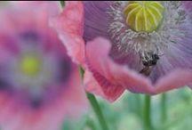 m♥ GARDEN PiCS / Little details I see in my garden 'goldenfairycottage'