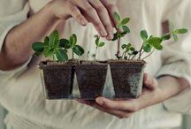 H O M E S T E A D / Urban / Country farming, big and small. Sustainability everywhere.