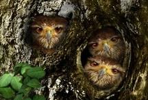 Owls! / by Jen Schwab