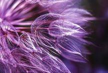 Purple Paradise / My favourite colour.