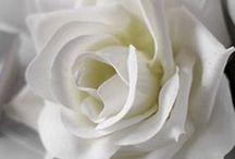 La Rosa / The rose: simple, classic and beautiful.
