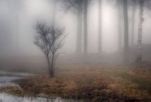 Misty Moments / Shrouds of mist: eerie, beautiful, tranquil.