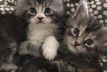 Kitties / Fun, fluffy and cute.
