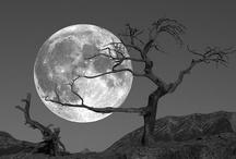 Lunar Love / The magic of moonlight.