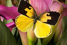 Butterflies / by Jen Schwab
