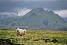 Iceland and Scandinavia / by Jen Schwab