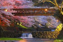 Japan / by Jen Schwab