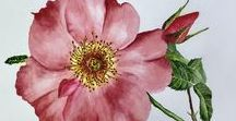 Botanical Art by Jade Scarlett / Botanical art and illustrations in watercolor