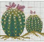 haft - rośliny - kaktusy