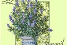 haft - rośliny - lawenda