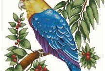 haft - ptaki - papugi