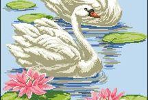 haft - ptaki - wodne