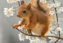 Cute animals / Lots of cute animals