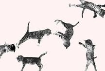 Kitties / by Jenny Highsmith