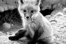 Cute / by Jenny Highsmith
