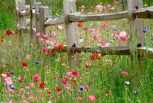 Fences & gates / I like old fences and gates, painted a dozen times, covered with flowers...