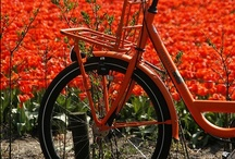 Bike it like its hot. / Bicycles! / by Suzzy H.
