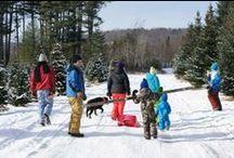 Vermont Christmas Tree Farms / Making Spirits Bright. Choose-n-Cut Christmas Tree Farms.