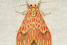Nattfjärilar(mal)