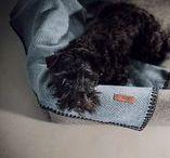 Mantas • Blankets / El producto estrella para nuestros perros. Estamos especialmente orgullosos de la calidad de nuestras mantas. Ver como se tejen estas mantas en telares realmente antiguos resulta emocionante, una experiencia romántica. Nuestros artesanos son maestros cardadores, tundidores, tintoreros y tejedores. Mantienen las artes tradicionales de lavado, teñido de la lana y acabado. Se tejen en Navarra, España. #HANNIKO #Mantas #MantasParaPerros #Blankets #DogBlankets #LuxuryDogs #LuxuryDogsBlankets